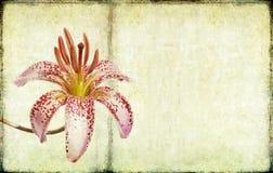 Lovely background image Royalty Free Stock Photos