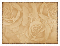 Lovely background image with roses Royalty Free Stock Photography