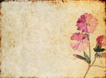 Lovely background texture Royalty Free Stock Images