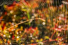 Web on beautiful foliage bokeh. Lovely background with web on beautiful foliage bokeh Royalty Free Stock Images