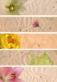 Lovely banners with floral elements Stock Photography