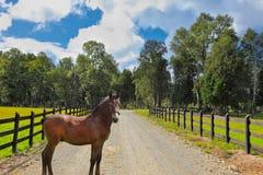 Lovely bay colt Stock Photo