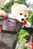 Lovely bear in bycle Stock Photos