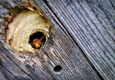 Lovely Bee keeper by the entrance to hive royalty free stock photos