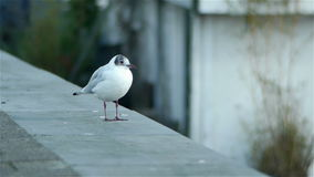 Lovely bird in Amsterdam. City stock footage