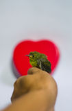 Lovely bird Royalty Free Stock Images