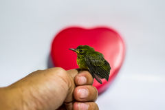 Lovely bird Stock Images