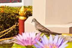 Lovely bird Stock Photos