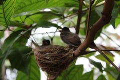 Lovely birds Stock Images