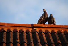 Lovely birds on roof in thailand Stock Photo