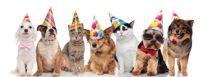 Lovely birthday pets wearing colorful caps royalty free stock images