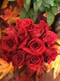 Beautiful bouquet of red roses stock images