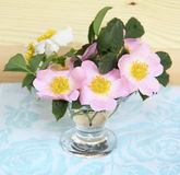 Lovely bouquet of flowers is a wild rose in a vase Royalty Free Stock Image