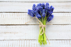 Lovely bouquet of spring flowers Stock Images