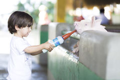 Lovely Boy feeds Pig Royalty Free Stock Photo