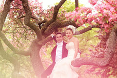 Lovely bride and groom Royalty Free Stock Image