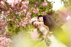 Lovely bride and groom Royalty Free Stock Images