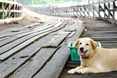 Lovely Brown dog sit down on the wooden bridge. Picture with copy space Royalty Free Stock Photo