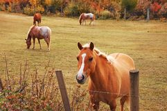 Lovely brown horse Royalty Free Stock Image