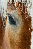 Lovely brown horse eye Stock Photos
