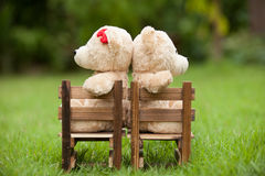 Lovely brown two teddy bear sit on wooden chair, In the morning, Royalty Free Stock Image