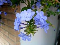 Lovely bunch of delicate light blue flowers! stock photo