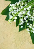 Lovely bunch of lily of the valley Stock Photo