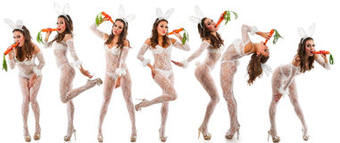 Lovely bunnies Stock Images