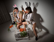 Lovely bunny couple Stock Photos