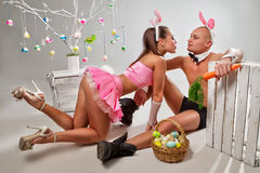 Lovely bunny couple Stock Photography