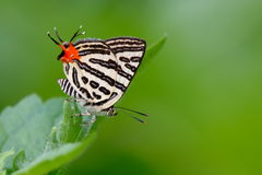 Lovely butterfly stock images