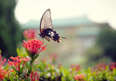 A lovely butterfly on a beautiful flower. The colorful butterfly stays on a beautiful flower in a park, the blurry background gives this picture great feeling royalty free stock photos