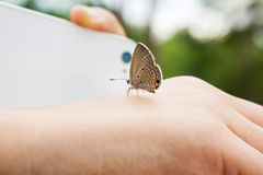 Lovely butterfly suddenly catch hand with blurred smartphone and. Finger shooting photo at background, harmony nature creature with human, butterfly on hand and Royalty Free Stock Photography
