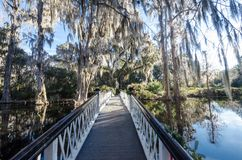 Lovely canopy of live oaks trees with resurrection fern on a bridge stock image