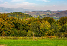 Lovely Carpathian countryside in mountains Royalty Free Stock Photos