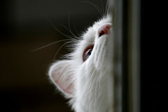Lovely cat... The kitten three months old is playing Royalty Free Stock Photos