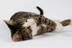 Free Lovely Cat Stock Image - 6725811