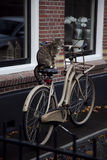 Lovely cat on bicycle royalty free stock photos