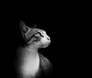 Lovely cat in black background Stock Photo