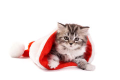 Lovely cat and chrismas hat Stock Photos