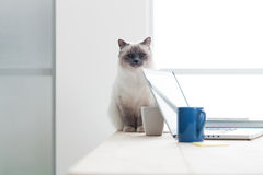 Lovely cat on the desktop Stock Photography