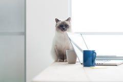 Lovely cat on the desktop Stock Photography