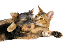 Lovely Cat and Dog Stock Photo