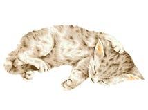 Lovely cat Stock Photos