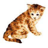 Lovely cat Royalty Free Stock Photography