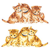 Lovely cat. I made the illustration of the cat which I loved Stock Photography