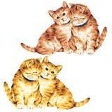 Lovely cat Royalty Free Stock Photos