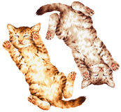 Lovely cat Stock Images