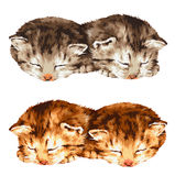 Lovely cat. I made the illustration of the cat which I loved Royalty Free Stock Image
