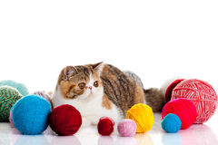 Lovely cat isolated on white background. Lovely cat with balls isolated on white background colourful close-up objects pet big eyes domestic animal image for royalty free stock image